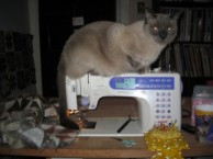 Siamese Cat on Sewing Machine